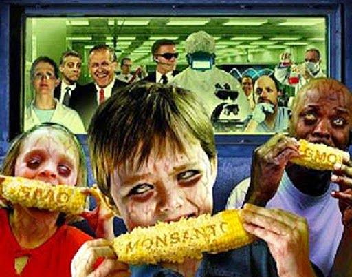 Στο όνομα της Μονσάντο: καλλιέργειες Γεννητικά Τροποποιημένων Οργανισμών (ΓΤΟ) στην Ουκρανία, τον σιτοβολώνα της Ευρώπης και της Κίνας