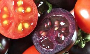 Η ΕΕ ενέκρινε την εισαγωγή και την κυκλοφορία 19 γενετικά τροποποιημένων προϊόντων!