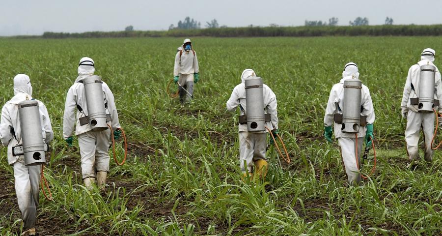 Πενταετής άδεια από την κυβέρνηση στο ζιζανιοκτόνο της Monsanto