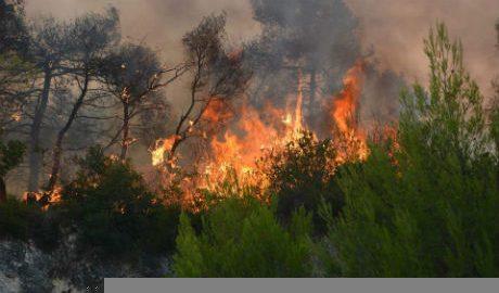Φοβερές δεν είναι οι πυρκαγιές που έγιναν, αλλά αυτές που θα γίνουν