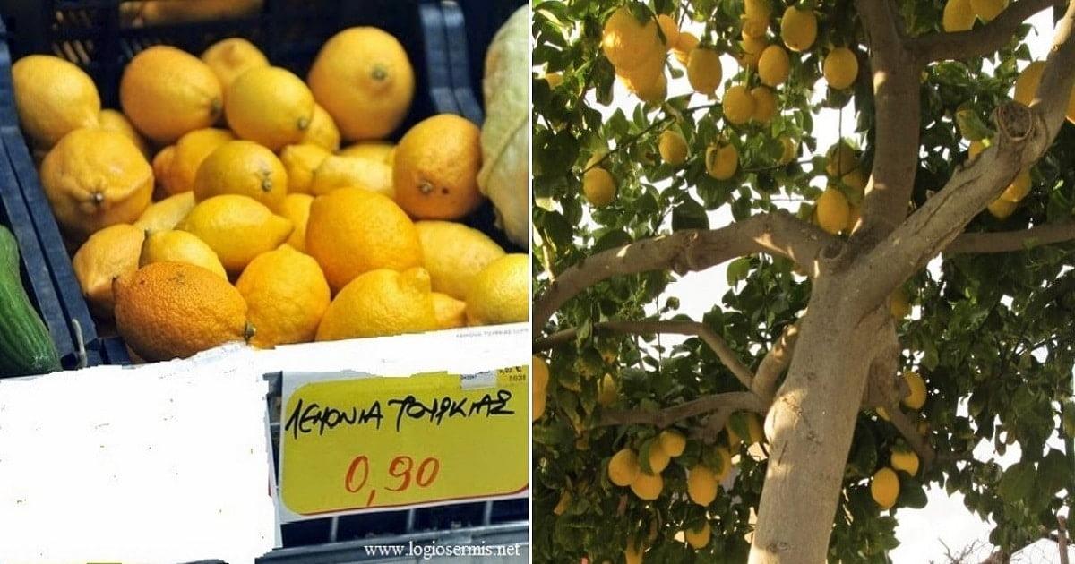 Ελληνικά λεμόνια σαπίζουν στα Δέντρα και εμείς εισάγουμε τουρκικά