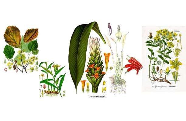 Αντιφλεγμονώδη φάρμακα, αντιφλεγμονώδεις τροφές και βότανα και τι να προσέχετε;