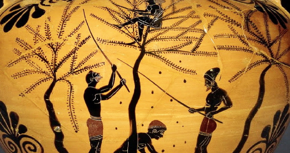 Πως έφτιαχναν οι Αρχαίοι Έλληνες τις φαγώσιμες ελιές.