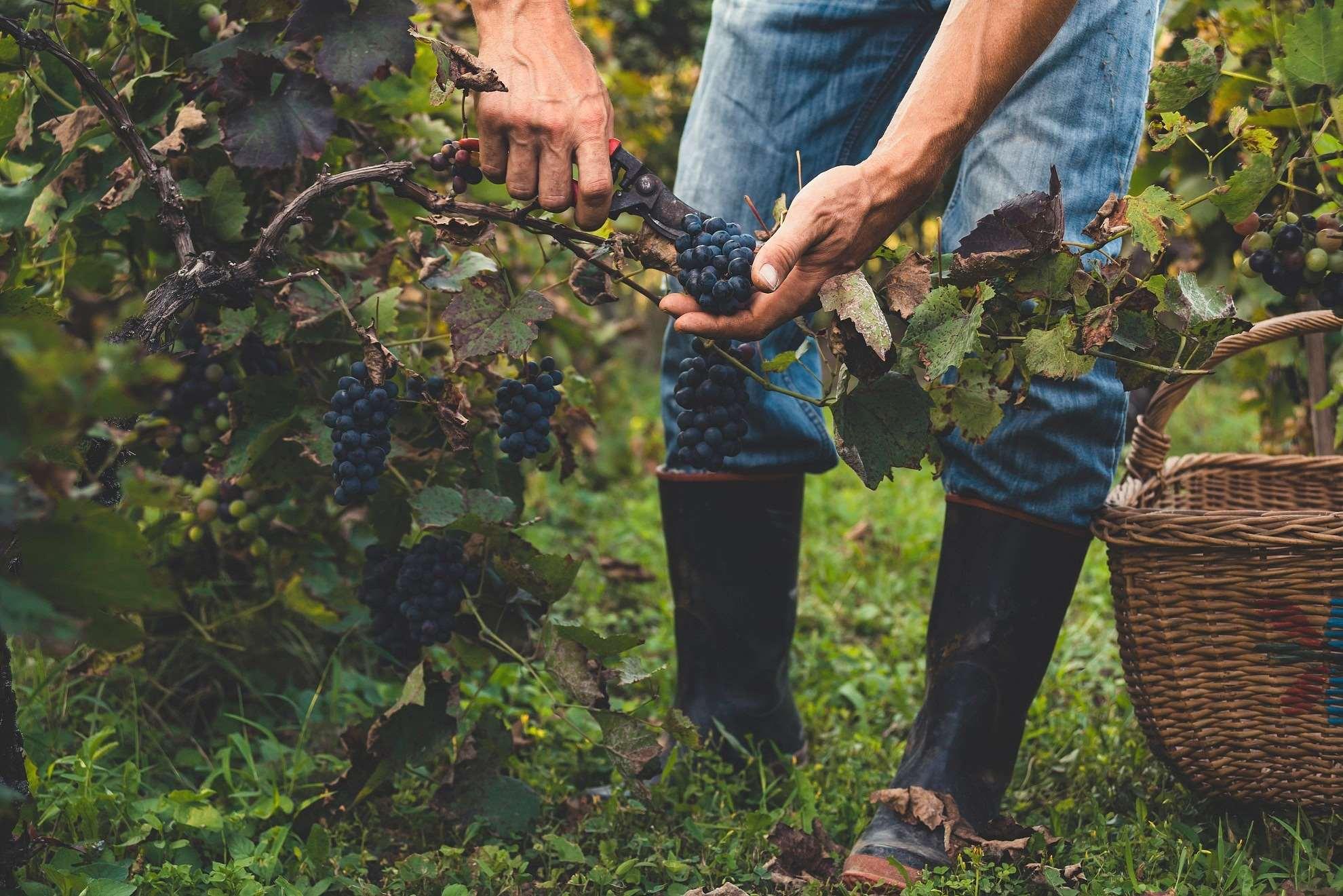 Πώς το ελληνικό κρασί κατάφερε να γίνει διεθνές trend