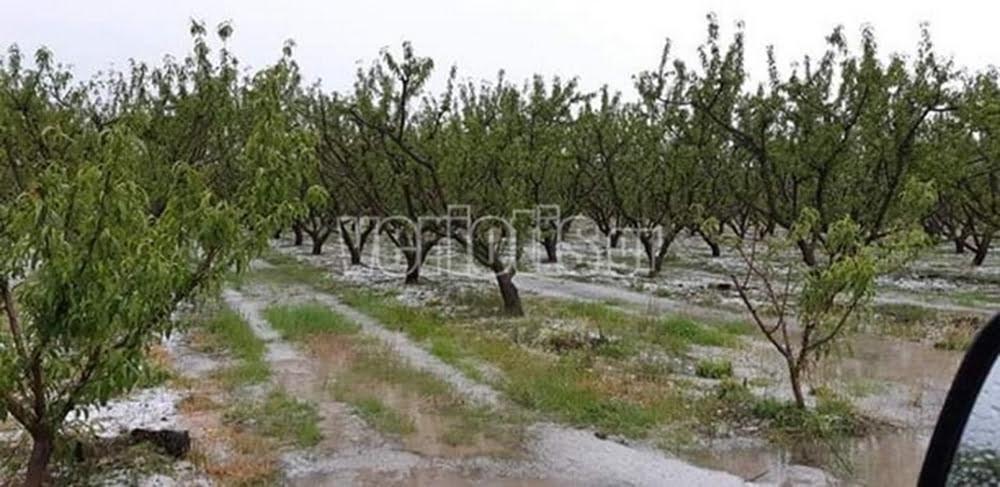 """Αγρότες Ημαθίας: """"Eίμαστε στο χείλος του γκρεμού"""" (Audio)"""