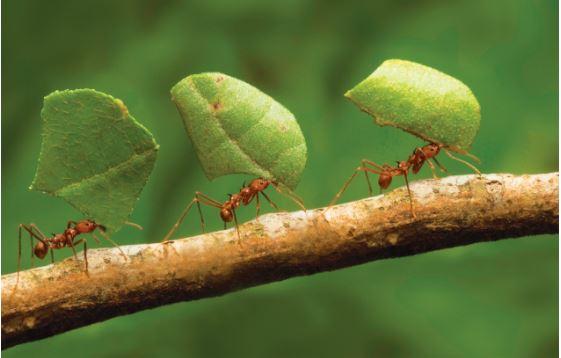 Τα μυρμήγκια και η Ελλάδα του σήμερα
