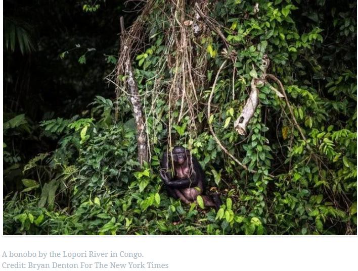 Οι ιοί των ζώων μεταπηδούν στους ανθρώπους – Η απώλεια δασών και δασικών εκτάσεων το κάνει πιο εύκολο