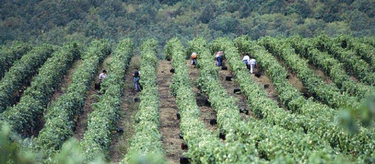 Η στατιστική εικόνα της ευρωπαϊκής παραγωγής κρασιού κατά Eurostat.