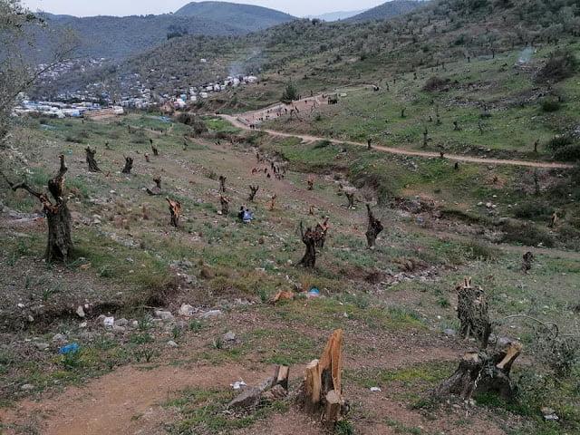 Κρανίου τόπος- Αποκαρδιωτικές εικόνες- Πάνω από 5000 ελαιόδεντρα έχουν ξεριζωθεί στην Μόρια