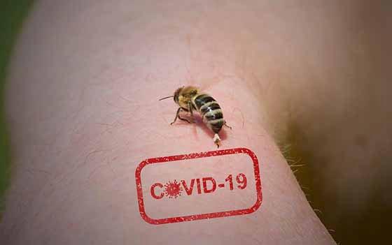 Ερευνα: Το Δηλητήριο της μέλισσας και η σχέση του με τον Κορωνοϊό SARS-CoV-2