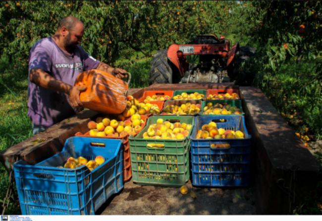 Ημαθία: Στα χωράφια Έλληνες εργάτες μετά από 30 ολόκληρα χρόνια