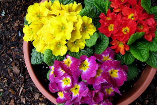 Γιατί οι Αλβανοί κυνηγούν το «λουλούδι του Δαρβίνου» στην Καστοριά – Το μυστικό του φυτού