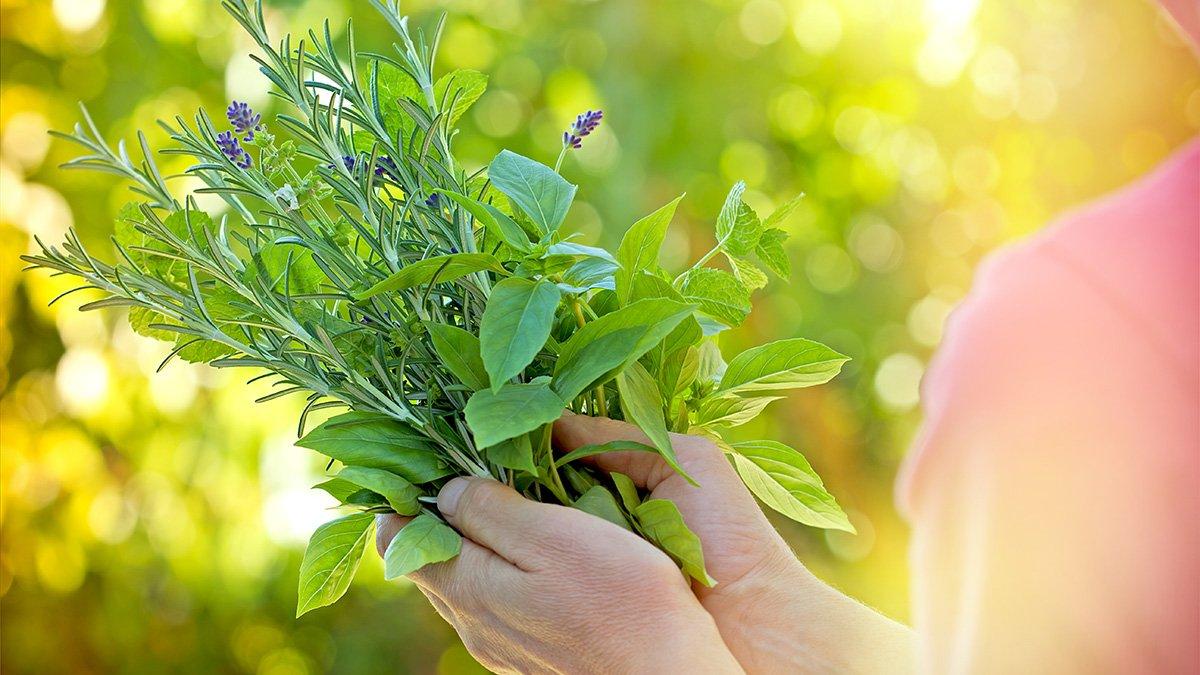 Υπέρταση: Τα τρία πιο δραστικά βότανα που ρυθμίζουν την πίεση