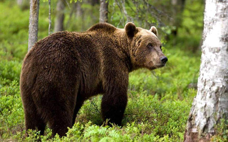 Οδηγός επιβίωσης: Τι να κάνετε αν στις βόλτες σας στο βουνό συναντήσετε αρκούδα