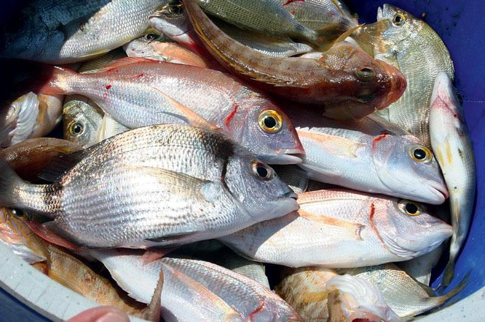 ΕΕ-Βρετανία: Τίνος είναι τα ψάρια της Μάγχης;