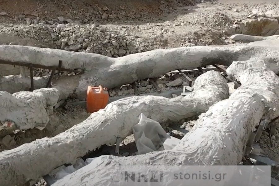 Απολιθωμένο δέντρο με κλαδιά, 20 εκατομμυρίων ετών