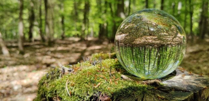 Σύσταση Ειδικής Επιτροπής Έρευνας της Ανθεκτικότητας των Ελληνικών Δασικών Οικοσυστημάτων