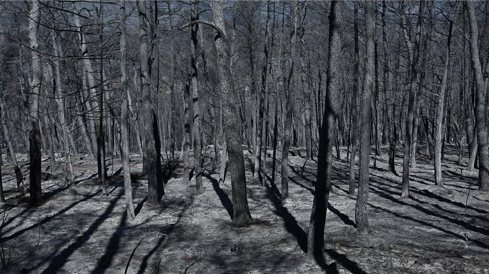 Πώς τα καμένα δάση θα αναγεννηθούν – Τι λένε δασολόγοι και περιβαλλοντολόγοι