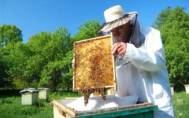 Οι πυρκαγιές του καλοκαιριού σάρωσαν την μελισσοκομία στην Ελλάδα